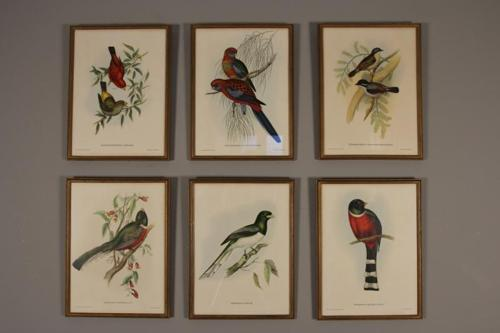 Vibrant Set of Ornithological Lithographs