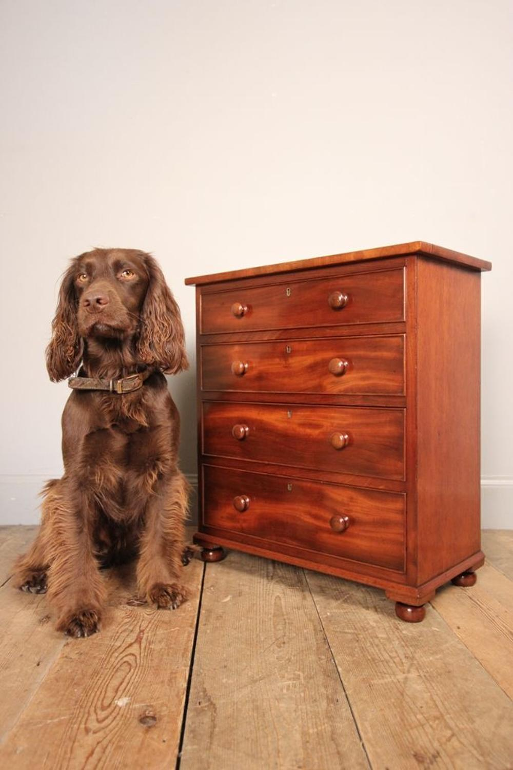 Super Quality 19th C Mahogany Apprentice Chest of Drawers