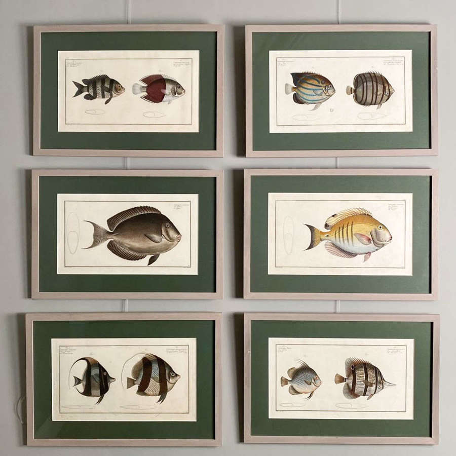 Six Hand Coloured Copper Plate Engravings